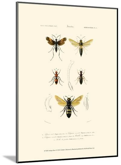 Antique Bees I-Blanchard-Mounted Print