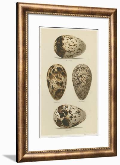 Antique Bird Egg Study VI-Henry Seebohm-Framed Giclee Print