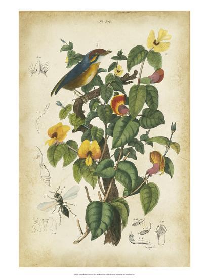 Antique Bird in Nature III--Art Print