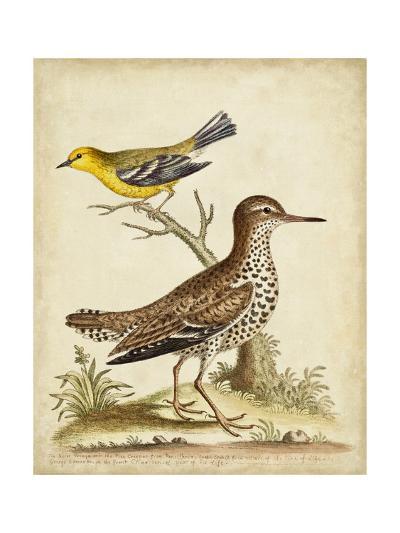 Antique Bird Menagerie I-George Edwards-Art Print