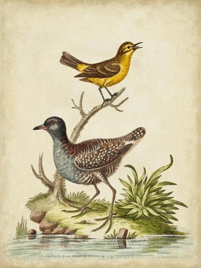 Antique Bird Menagerie II-George Edwards-Art Print