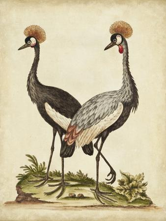 https://imgc.artprintimages.com/img/print/antique-bird-menagerie-vii_u-l-q1bfo0w0.jpg?p=0