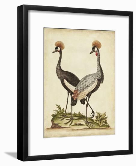 Antique Bird Menagerie VII-George Edwards-Framed Art Print