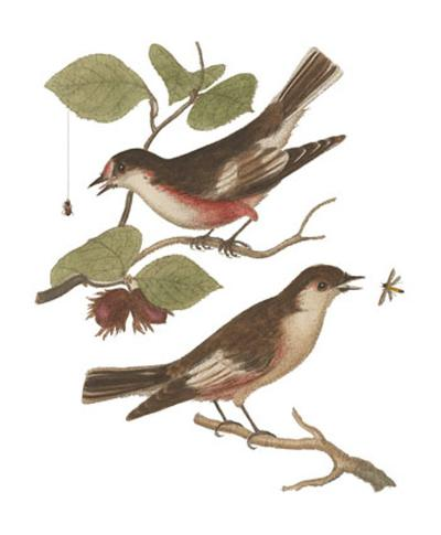 Antique Bird Pair I-James Bolton-Art Print
