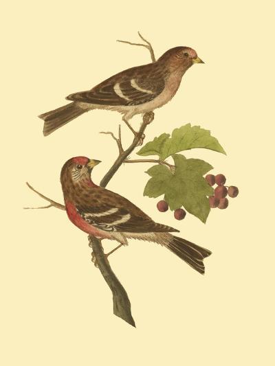 Antique Bird Pair II-James Bolton-Art Print