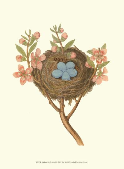 Antique Bird's Nest I-James Bolton-Art Print