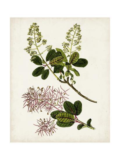 Antique Botanical Study II-0 Unknown-Art Print