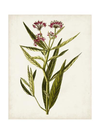 Antique Botanical Study VIII-0 Unknown-Art Print