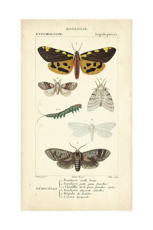 https://imgc.artprintimages.com/img/print/antique-butterfly-study-i_u-l-pwc9ku0.jpg?p=0