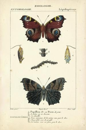 https://imgc.artprintimages.com/img/print/antique-butterfly-study-ii_u-l-pwc9l60.jpg?artPerspective=n