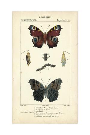 https://imgc.artprintimages.com/img/print/antique-butterfly-study-ii_u-l-pwc9l60.jpg?p=0