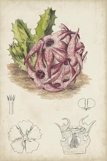Antique Cactus III-Curtis-Art Print