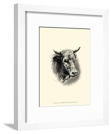 Antique Cattle II-F. Lehnert-Framed Art Print