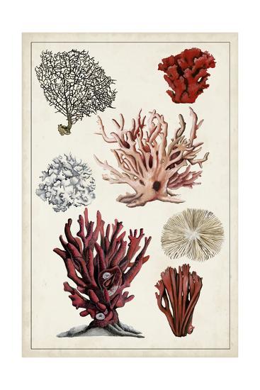 Antique Coral Study I-Naomi McCavitt-Art Print