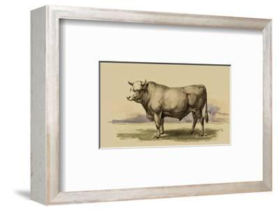 Antique Cow I-Julian Bien-Framed Art Print