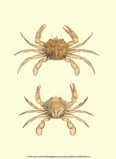 Antique Crab III-James Sowerby-Art Print