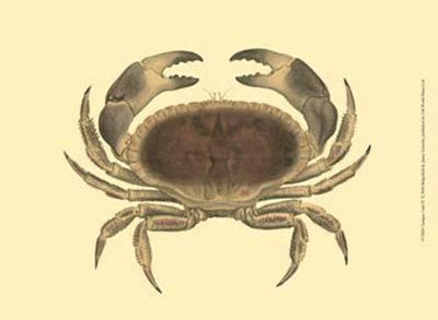 Antique Crab IV-James Sowerby-Art Print