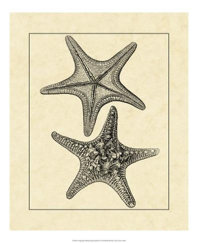 Antique&Deckle Vintage Starfish II--Giclee Print