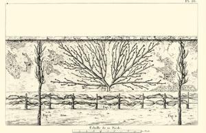 Antique Diagram for Espaliers I