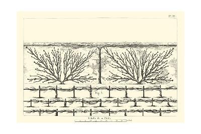 Antique Diagram for Espaliers II--Art Print
