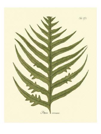 https://imgc.artprintimages.com/img/print/antique-fern-viii_u-l-p8lbbf0.jpg?p=0