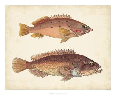Antique Fish Species I--Giclee Print