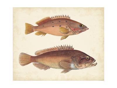 Antique Fish Species I--Art Print