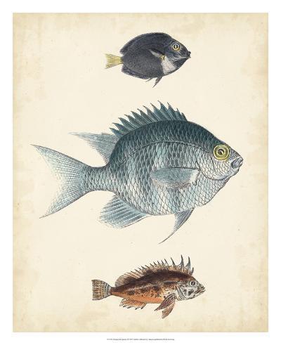 Antique Fish Species III--Giclee Print