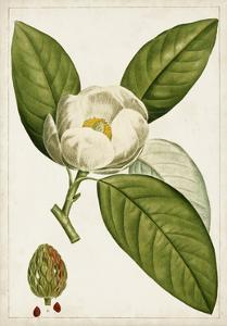 Antique Flowering Trees II