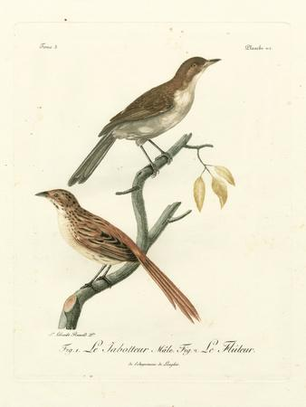 Antique French Birds I Giclee Print by Francois Langlois | Art com