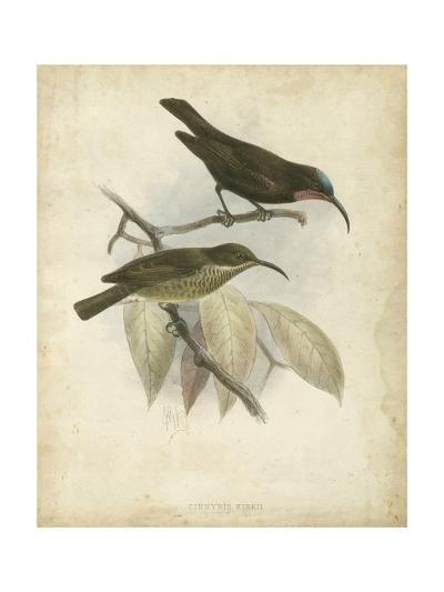 Antique Gould Hummingbird I-John Gould-Art Print