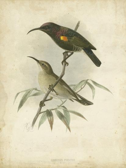 Antique Gould Hummingbird II-John Gould-Art Print