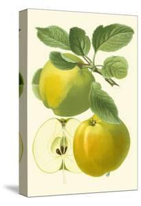 Antique Green Apple