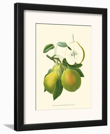 Antique Green Pear--Framed Art Print