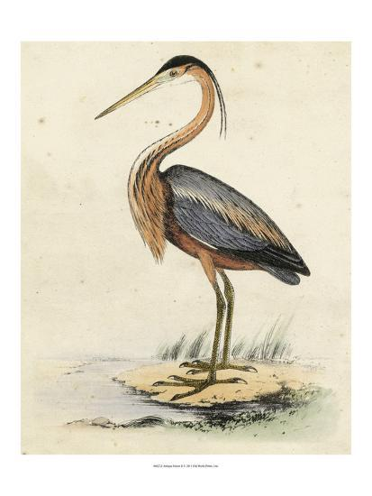 Antique Heron II--Art Print