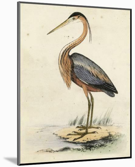 Antique Heron II--Mounted Art Print