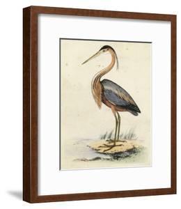 Antique Heron II