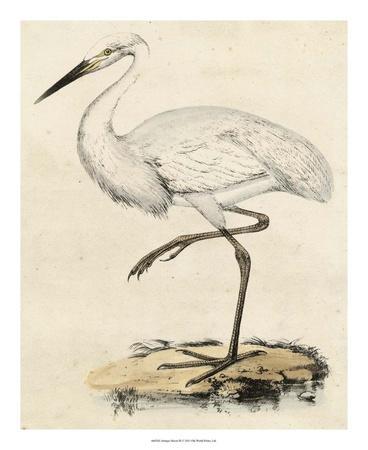 https://imgc.artprintimages.com/img/print/antique-heron-iii_u-l-f561860.jpg?p=0