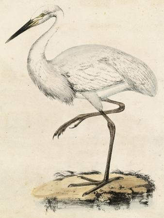 Antique Heron III