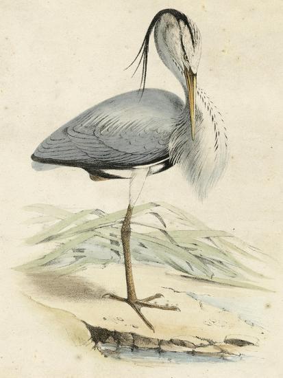 Antique Heron IV--Art Print