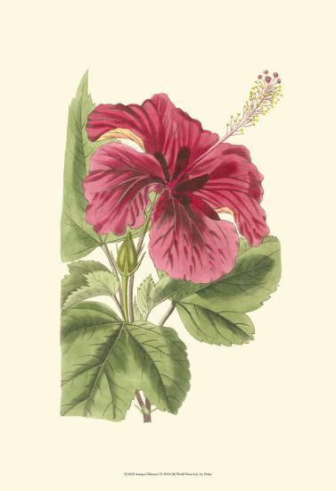 Antique Hibiscus I-Drake-Art Print