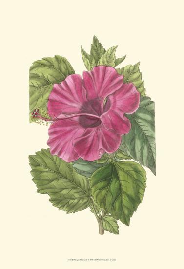 Antique Hibiscus II-Drake-Art Print