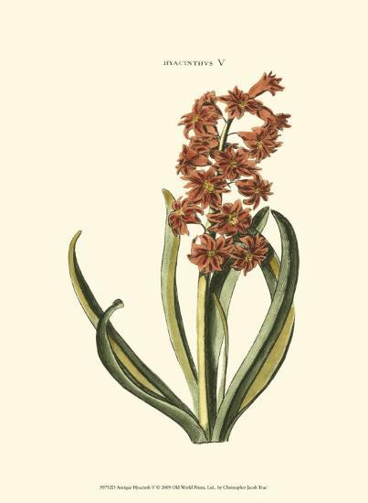 Antique Hyacinth V-Christoph Jacob Trew-Art Print