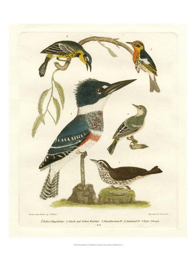 Antique Kingfisher I-Alexander Wilson-Art Print