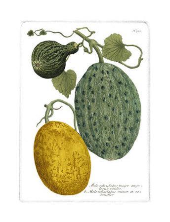 https://imgc.artprintimages.com/img/print/antique-melons-ii_u-l-etfs00.jpg?p=0