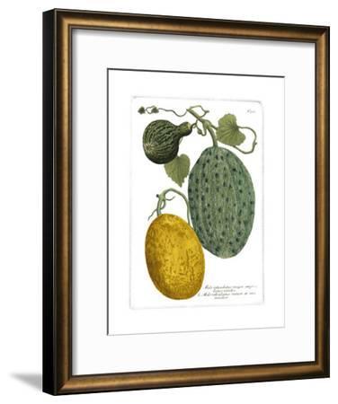 Antique Melons II-Weimann-Framed Art Print