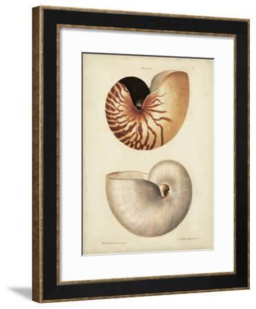Antique Nautilus I-George Wolfgang Knorr-Framed Art Print