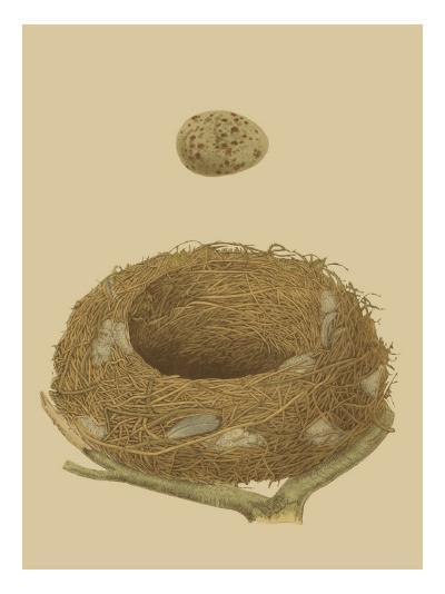 Antique Nest and Egg IV-Reverend Francis O^ Morris-Art Print