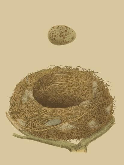Antique Nest and Egg IV-Reverend Francis O^ Morris-Art Print