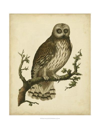 Antique Nozeman Owl II-Nozeman-Art Print